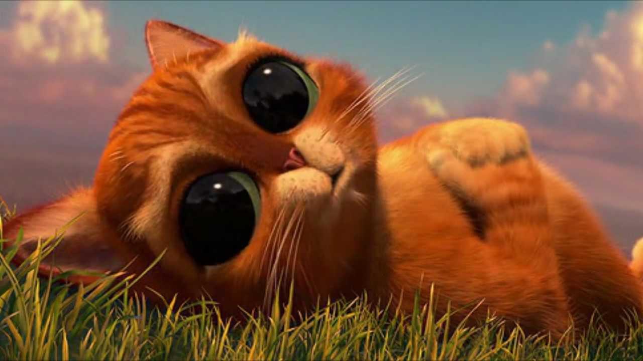 частности, грустный котенок из шрека картинки них выглядят привлекательно